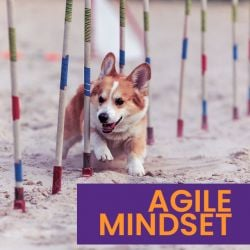 What is an Agile mindset?